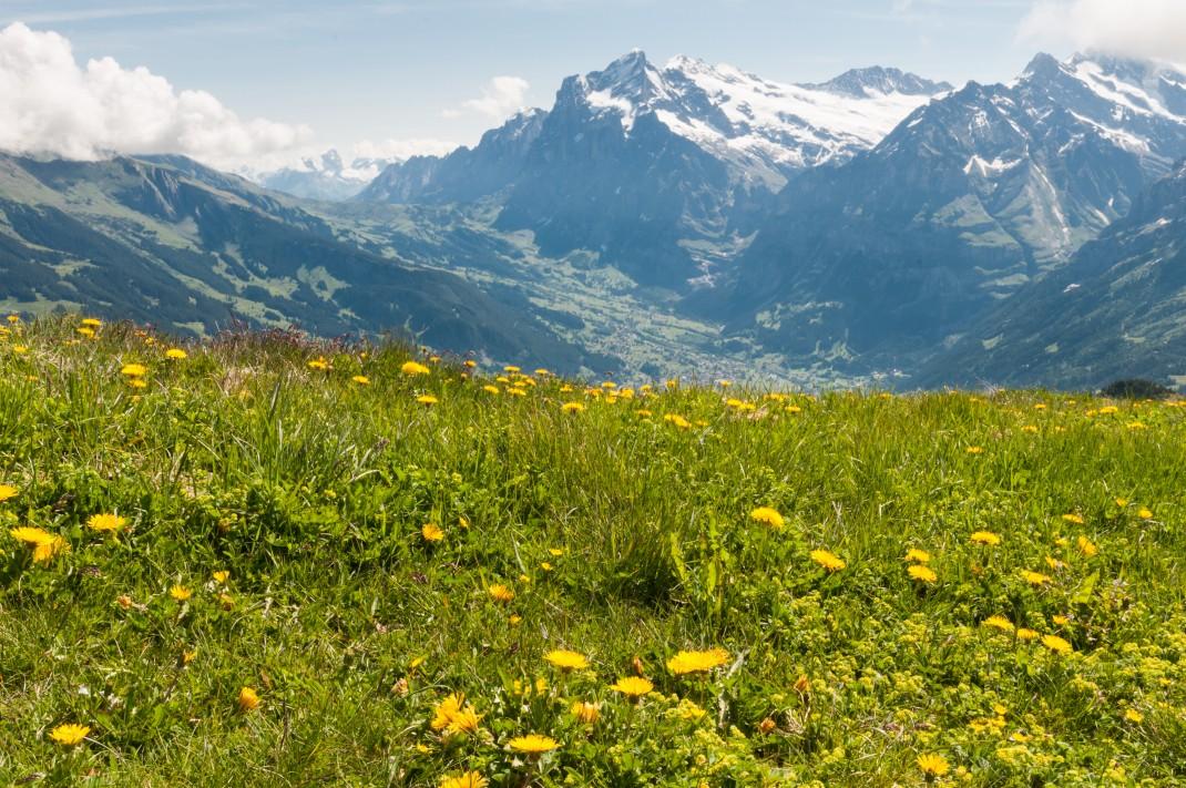 Switzerland2011_1198
